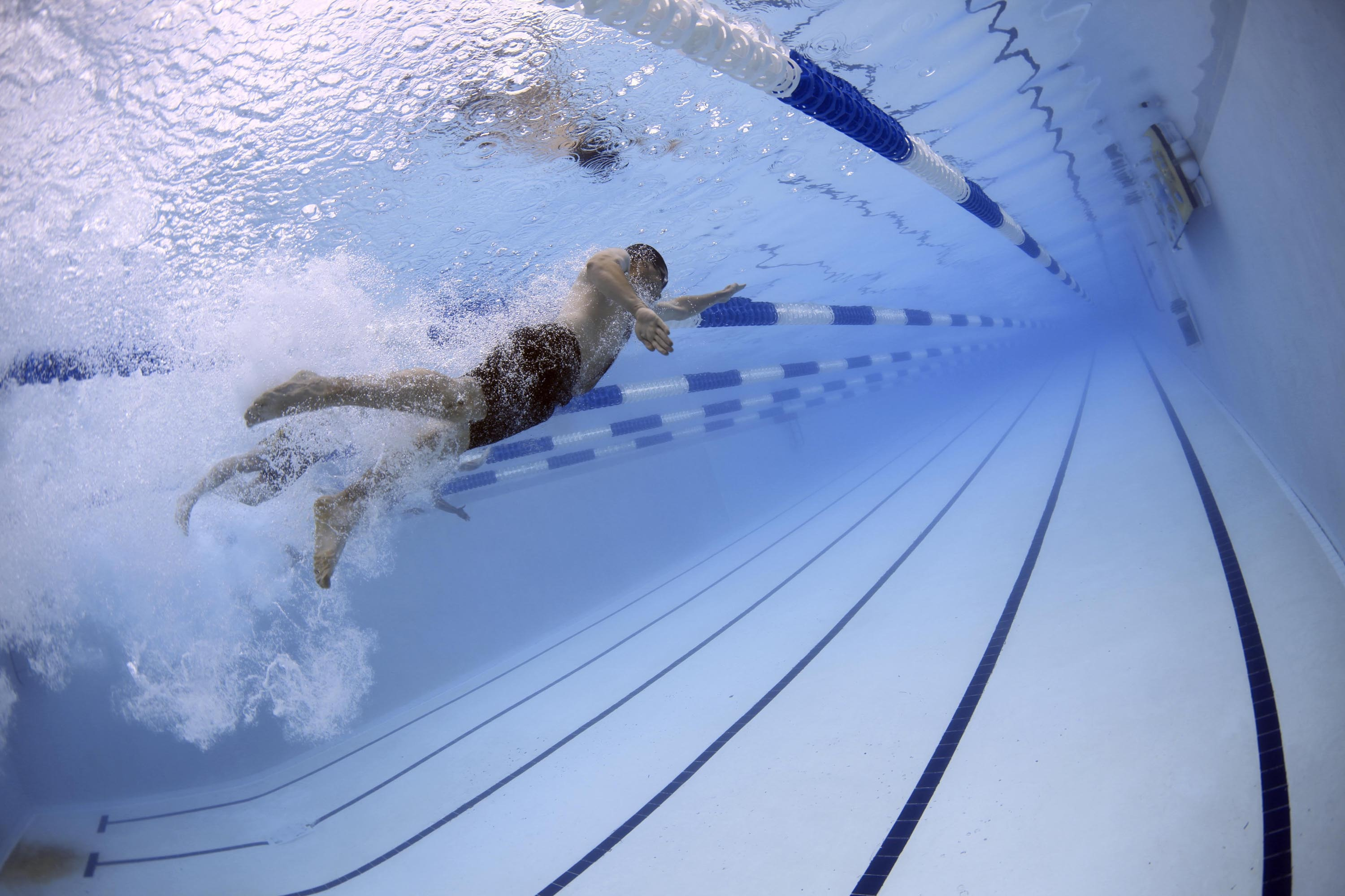 swimmers-79592